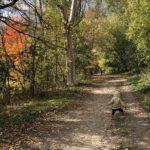 【トロント】Taylor Creek Parkで小川を見ながら散歩しました
