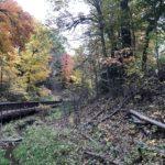 【トロントの紅葉】Glen Stewart Ravineで秋の散策